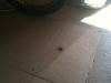 huge_spider